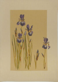 Bearded Irises tapestry - fine French wall tapestries