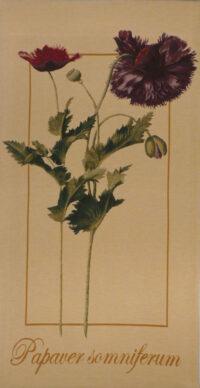 Papaver Somniferum tapestry - French botanical tapestries