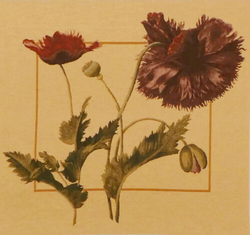 Papaver square tapestry - Redoute floral art - botanical tapestries