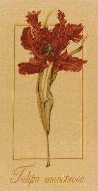 Tulipa Munstrosa tapestry - tulip tapestry wallhanging