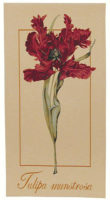 Tulipa Munstrosa tapestry - tulip tapestry wallhanging