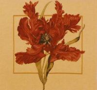 Tulipa square tapestry - Tulipa Munstrosa by Redoute - tulip tapestries