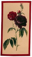 Rosa Gallica bordered tapestry - botanical art