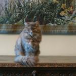 Monet's Garden tapestry